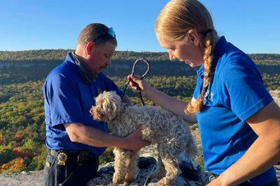Hungry, thirsty, but unharmed: Dog rescued after being trapped in crevice for five days