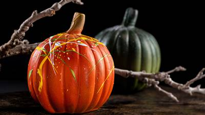 Five Questions We're Googling About Pumpkins Right Now!